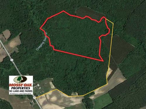 Reduced, 58.4 Acres of Hunting an : Vanceboro : Craven County : North Carolina