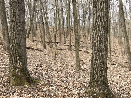 Earley Ridge Rd, 98 Acres : New Matamoras : Washington County : Ohio