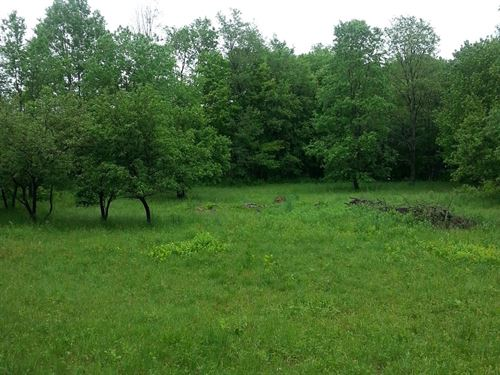 Empeyville Woods And Meadows : Camden : Oneida County : New York