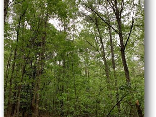 21.33 Acres In Lincoln County In Bo : Bogue Chitto : Lincoln County : Mississippi