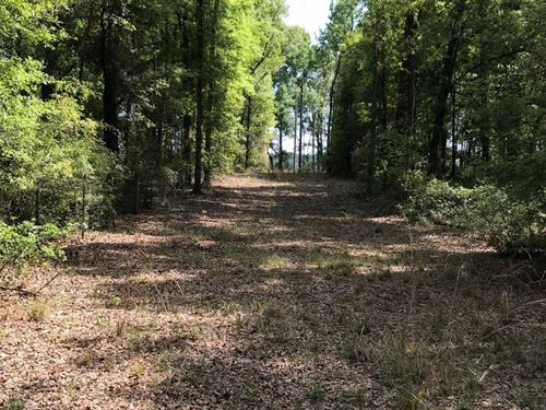 Beautiful Acreage in The Country : O'brien : Suwannee County : Florida