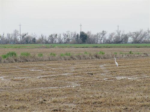 Yolo County Farm Land in Winters : Winters : Yolo County : California