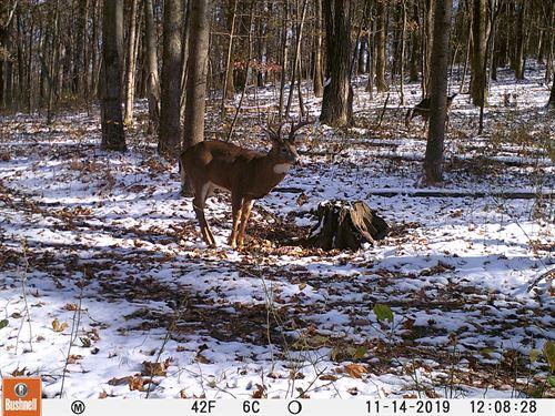 Poplar Grove Rd, 100 Acres : Peebles : Adams County : Ohio