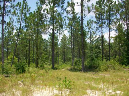 46 Acres Hunting Or Timber Tract : Eastman : Dodge County : Georgia