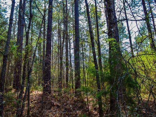 28+/- Acres In Woodruff : Woodruff : Spartanburg County : South Carolina