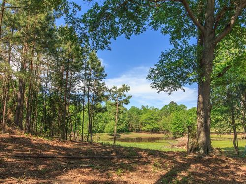 Land, West Tennessee Acreage Pond : Bethel Springs : McNairy County : Tennessee
