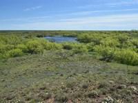 Hidden Gem, 319 Acres of Quality : Seymour : Baylor County : Texas