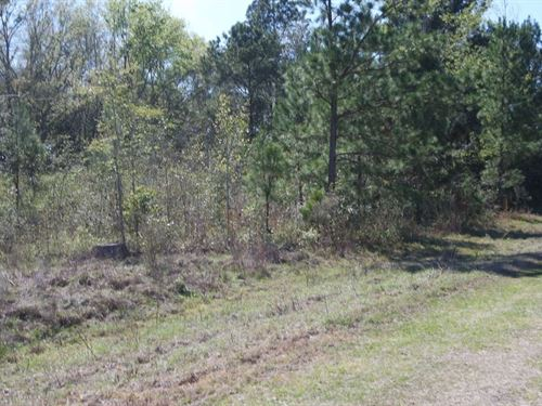 10 Acres Square Perfect Mini Farm : Live Oak : Suwannee County : Florida