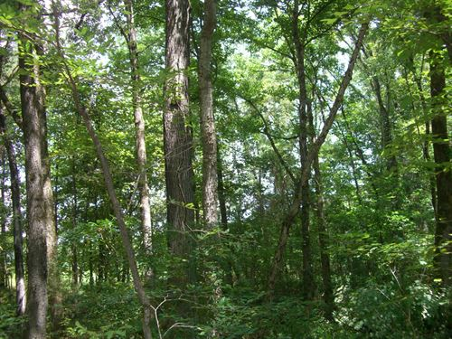 73 Acres Wooded Land : Scottsboro : Jackson County : Alabama