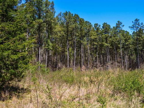 7+/- Acre Homesite In Woodruff : Woodruff : Spartanburg County : South Carolina
