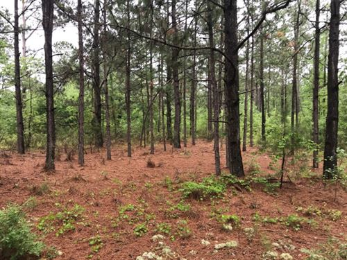 Hargrove Woods : Perkins : Jenkins County : Georgia