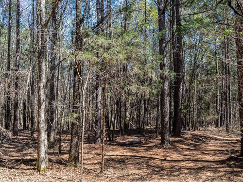 26+/- Acre Recreational Parcel : Woodruff : Spartanburg County : South Carolina