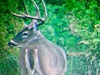 198 Acre Turnkey Trophy Buck Prope : Spencerville : Choctaw County : Oklahoma