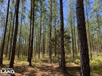 Dyas Road Recreational And Timber : Bay Minette : Baldwin County : Alabama