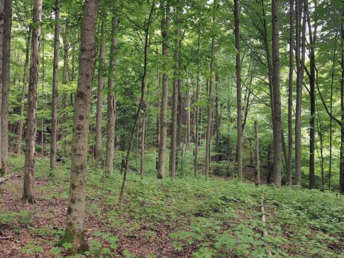 Large Mixture Of Woods And Fields : Homer : Cortland County : New York