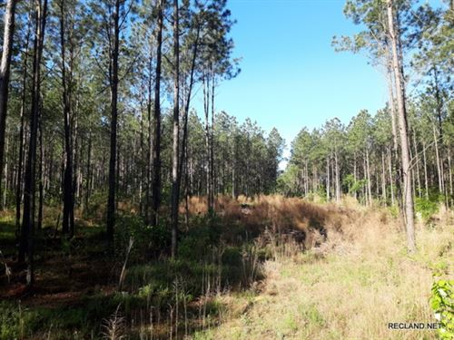 21.5 Ac, Timberland For Rural Home : Milam : Sabine County : Texas