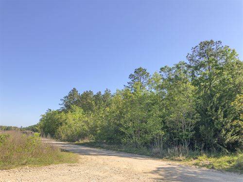 119 Acres Devers Woods : Devers : Liberty County : Texas