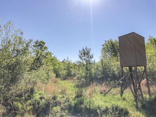 22 Acres Devers Woods : Devers : Liberty County : Texas