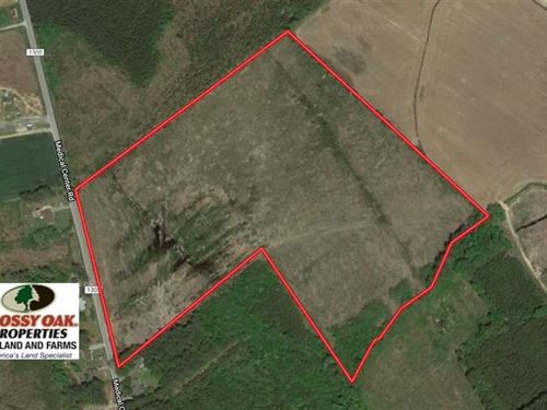 39 Acres of Hunting And Timber Lan : Gates : North Carolina