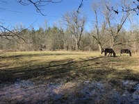 40 Acres in Sumter Co, AL on Pace : Belmont : Sumter County : Alabama