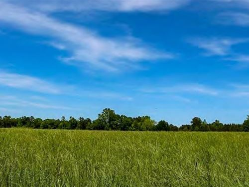 82 Acres In Covington County In Col : Collins : Covington County : Mississippi