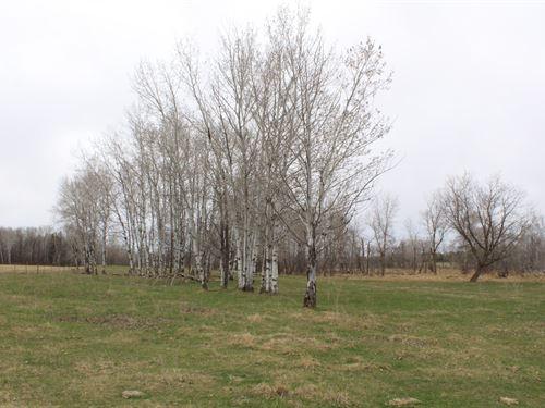 40 Acres Land For Sale Motley MN : Motley : Cass County : Minnesota