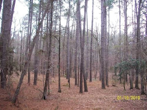 Hunting Land Homochitto National : Crosby : Wilkinson County : Mississippi