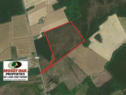 33.8 Acres of Hunting And Timber : Gates : North Carolina