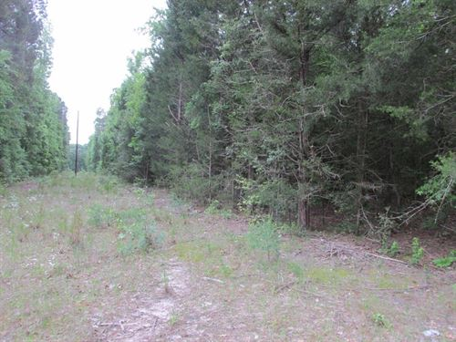 Land Near Elkhart Texas With Pond : Elkhart : Anderson County : Texas