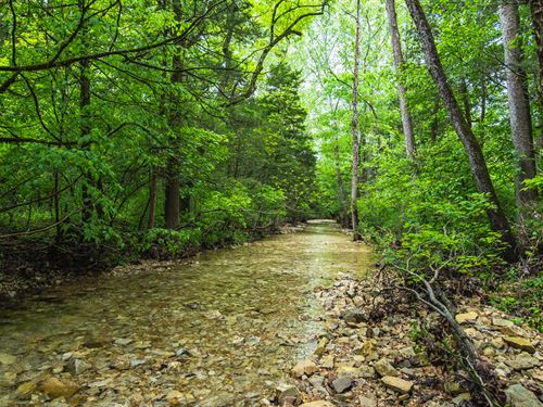 Prime Hunting Land, Live Water : Gainesville : Ozark County : Missouri