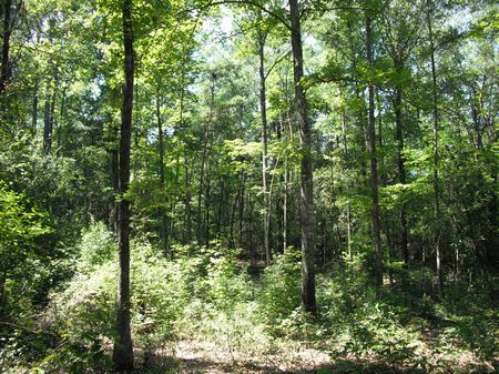 Homesite Surrounded By Wma : Dry Branch : Twiggs County : Georgia