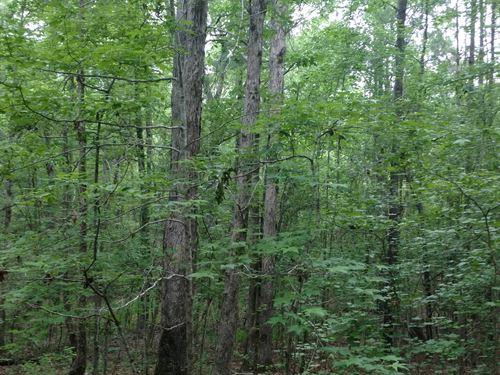 Hunter's Retreat : Norwood : Warren County : Georgia