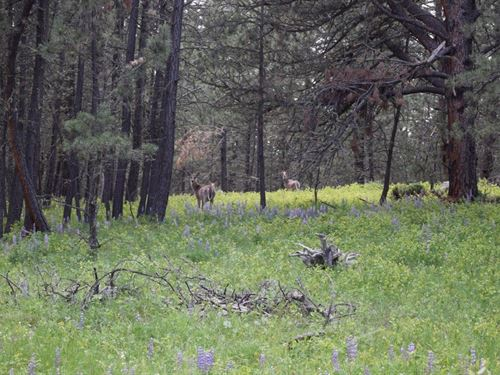 Cabin Site On Avon Lane : Forest Grove : Fergus County : Montana