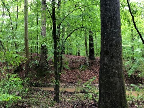 20 Acres In Madison County In Canto : Canton : Madison County : Mississippi