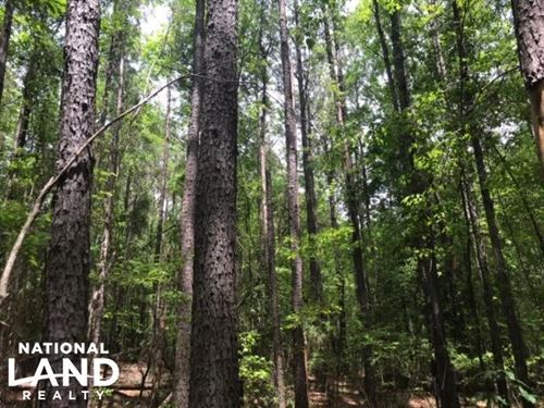 Hunting, Homesite, And Timber Oppor : Amory : Monroe County : Mississippi