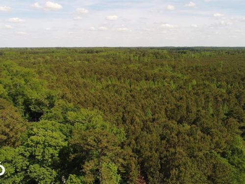 Princeton-Kenly Road Timber & Hunti : Kenly : Johnston County : North Carolina