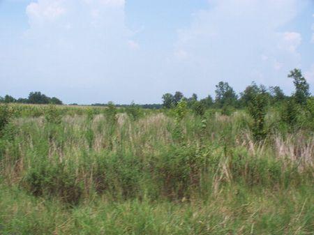 7.5 Acres : Elliot : Lee County : South Carolina