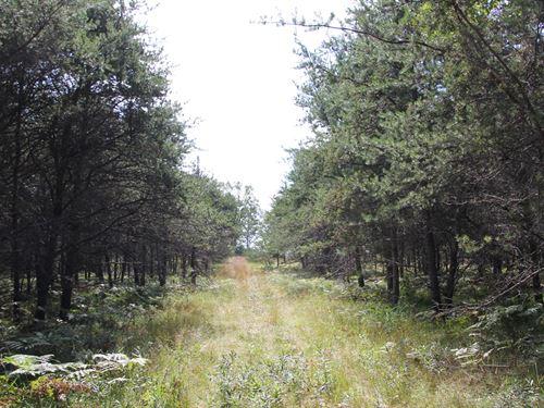 75 Acres Hunting Property Curran MI : Curran : Alcona County : Michigan
