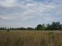 36.48 Acres, Lexington County, Sc : Pelion : Lexington County : South Carolina