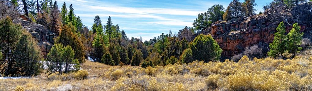 Homesite Near National Forest Land : Grants : Cibola County : New Mexico