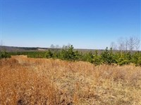220 Acres in Dover, Stewart County : Dover : Stewart County : Tennessee