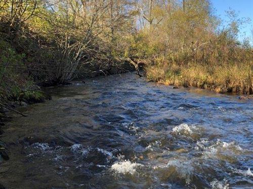 Trout Stream : Columbus : Chenango County : New York