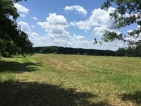 Pasture With Scattered Trees : Lake City : Columbia County : Florida