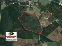 207 Acres of Hunting And Timberlan : Autryville : Cumberland County : North Carolina