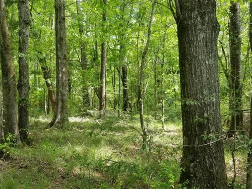 Stills Cross Roads Hunting, Timber : Troy : Pike County : Alabama