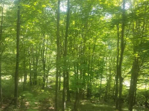 Mountain Land For Sale : Swords Creek : Russell County : Virginia