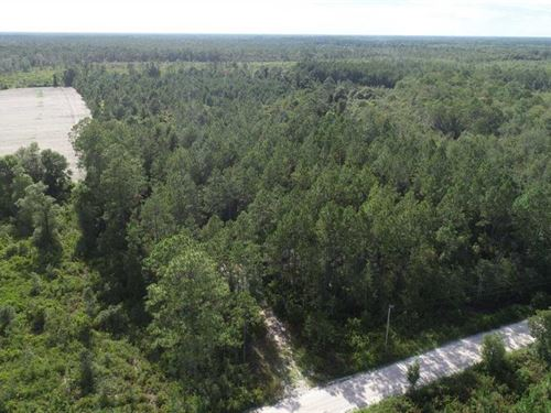 160 Acres Land For Sale in Ware : Manor : Ware County : Georgia