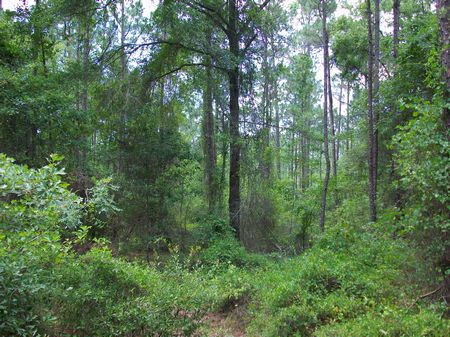 36 Acres Half Woods Half Farmland : Hawkinsville : Pulaski County : Georgia
