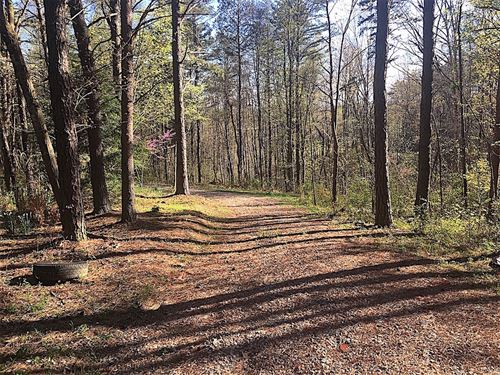 Log Pile Rd, 43 Acres : Ray : Vinton County : Ohio