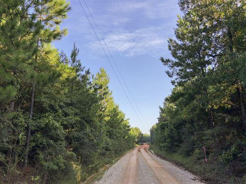 48 Acres Tevis : Livingston : Polk County : Texas